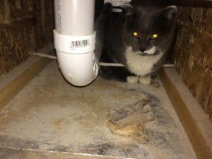 cat in duct